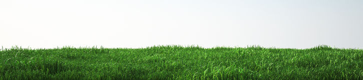 Field of soft grass, perspective view with close-up. 3d illustration Stock Photography