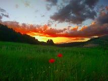field solnedgången Arkivfoton