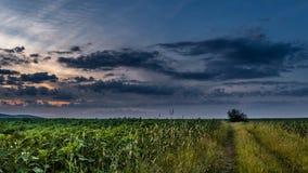 field solnedgången Arkivbild