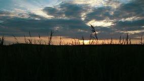 field solnedgången arkivfilmer