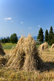 Field with some bundles of hay in the summer Royalty Free Stock Photos