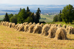 Field with some bundles of hay in the summer on blue sky background Royalty Free Stock Photos