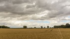 Field in Somerset England A. Cloudscape before Rain, summer 2018 stock photography
