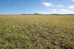The field in Soria. In Castilla Leon, Spain Stock Images