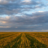 Field sown with clover, cloudy sky. Spring landscape Stock Images