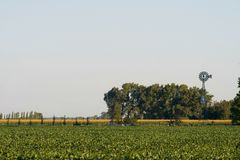 Field of soybean Royalty Free Stock Photos