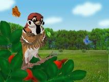 Field sparrow Royalty Free Stock Photo