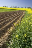 Field in a spring. Spring time in a fields Stock Photo
