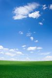 Field at spring Royalty Free Stock Images