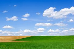 Field at spring. Green wheat field and brown ploughland at springtime Stock Image