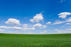 Field at spring Royalty Free Stock Photo