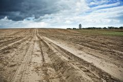 Field at spring Stock Image