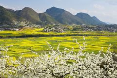 Field in spring Royalty Free Stock Images