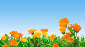 Field of spring Stock Photo