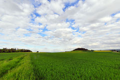 Field in Spring Stock Images