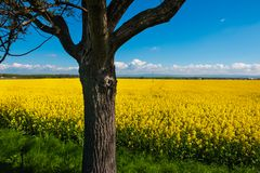 Field in spring Royalty Free Stock Photography