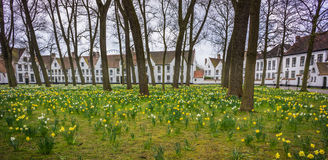 Field of spring daffodils before Beguinage, homes of Roman Catholic nuns. Field of spring daffodils before Beguinage, home to Roman Catholic nuns royalty free stock images
