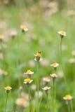 Field of spring flowers. Bangkok thailand Royalty Free Stock Photos
