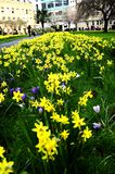 Field of Spring Flowers Stock Images