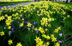 Field of Spring Flowers Stock Image