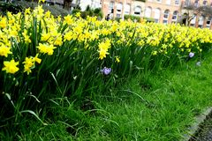 Field of Spring Flowers Royalty Free Stock Photography