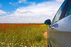 The field of spring flowers and poppies and car Royalty Free Stock Photography
