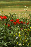 A field of spring flowers (shallow depth of field) Stock Photo