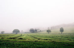 Field. Spring foggy field in Spain Royalty Free Stock Photo