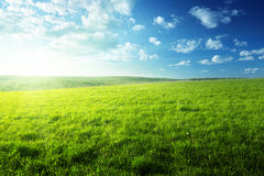 Field of spring grass Royalty Free Stock Image