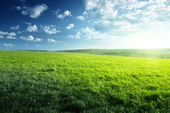 Field of spring grass and forest Stock Image