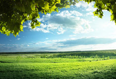 Field of spring grass Stock Photography