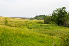 Field of spring grass and forest Stock Photos