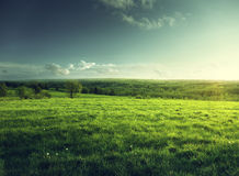 Field of spring grass and forest Royalty Free Stock Photography