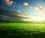 Field of spring grass and forest Stock Photography