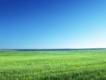 Field of spring grass Stock Image