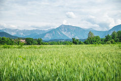 Field of spring grass and mountains. Austria Stock Photo