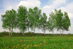 Field of spring grass, trees and cloudy sky Royalty Free Stock Image