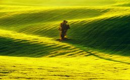 Field. spring morning. a beautiful sunrise in the field Stock Photography