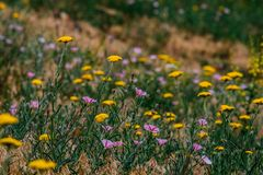 Field spring summer flowers with blurred background royalty free stock photos