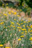 Field spring summer flowers with blurred background stock photography