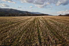 Field in the spring time near forest, Countryside landscape Stock Image