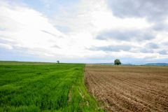 A field in spring time with two parcels of different stages  Stock Photo