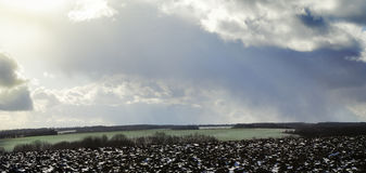 Field. Spring winter wheat field. panorama Royalty Free Stock Photography