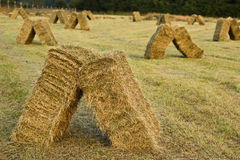Field of stacked hay bales on farm Stock Photos
