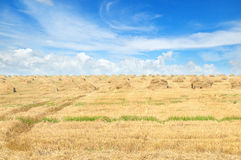Field with Stacks of straw and sky Stock Image
