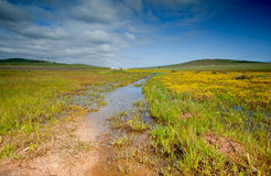Field with standing water Stock Photography