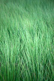 Field of a steppe feather grass Stock Photos