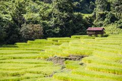 Field steps. Steps rice field in northern part of Thailand Royalty Free Stock Photo