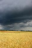 Field before storm. Wheat field before storm in summer Stock Images