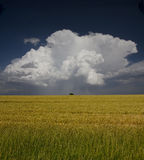 Field and storm Royalty Free Stock Photos